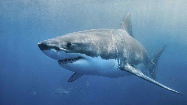 Captan el momento que un tiburón ataca a un surfista