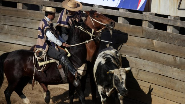 Contraloría anuló artículo que prohíbe el rodeo en Recoleta