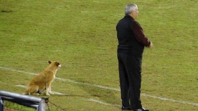 La perra que es ayudante de campo en el fútbol paraguayo — Tesapara