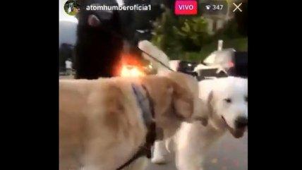 Alexis sacó a pasear a sus perros Atom y Humber con las correspondientes medidas sanitarias